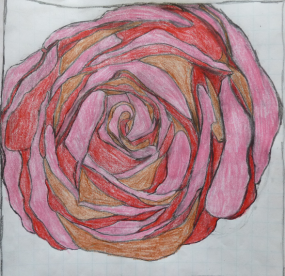 Drawing rose design